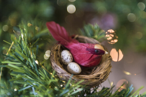 Birdnesting Christmas